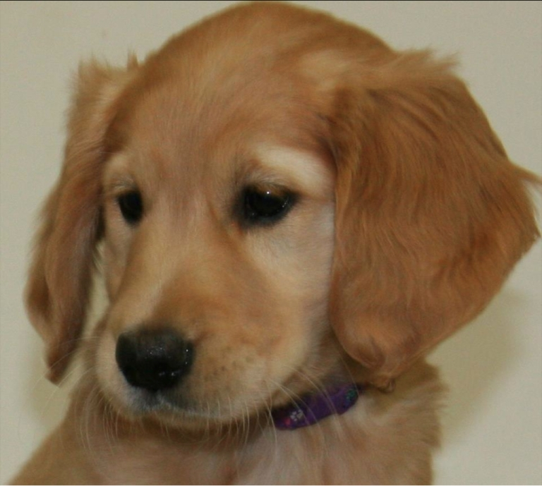 <p>Abused puppies rank highest on the empathy scale, according to a new study.</p>