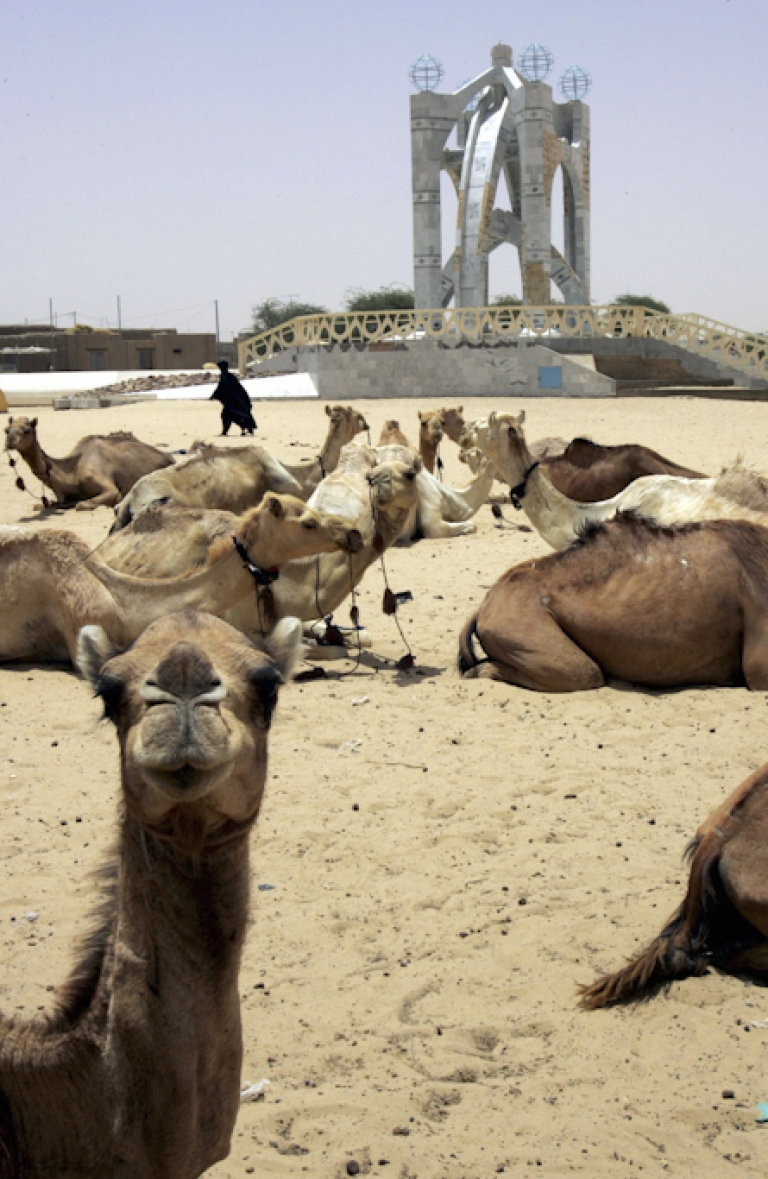<p>Dromedaries hang in a street of the northwestern Malian city of Timbuktu on April 11, 2006. The fabled desert city of Timbuktu fire the imagination of every adventurer, but an outbreak of fierce fighting in the region has raised fears tourists may snub the African treasure.</p>