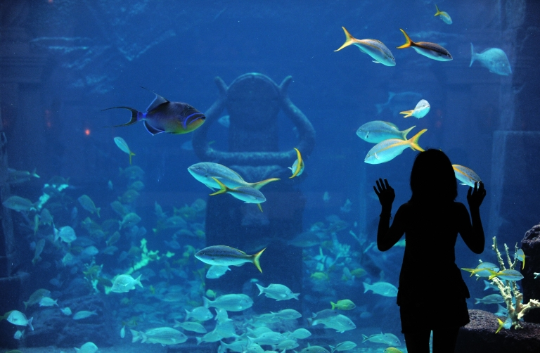 <p>A tourist admires fishes in an aquarium at a resort in Nassau, the Bahamas, on May 29, 2009.</p>