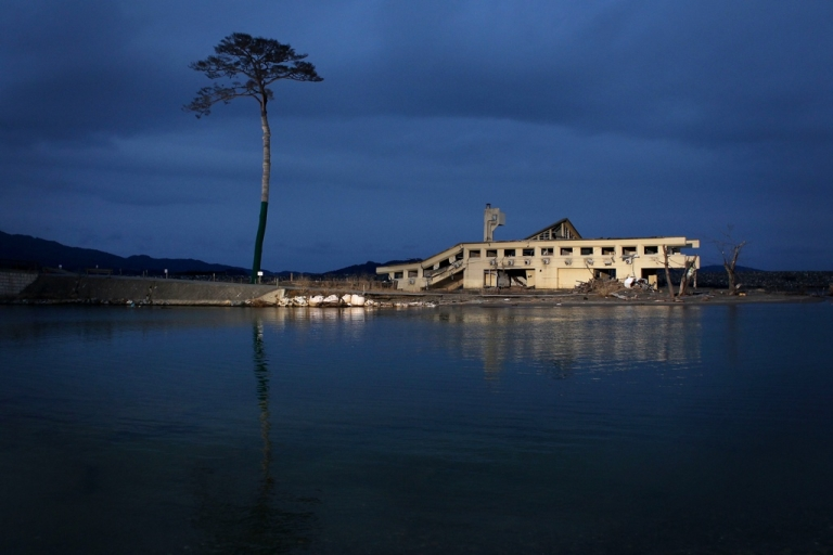 <p>A single pine tree that was left standing after the March 11 tsunami, which swept away an entire forest in the city of Rikuzentakata, is seen on March 10, 2012.</p>