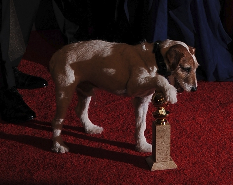<p>Uggie the dog, the real star of