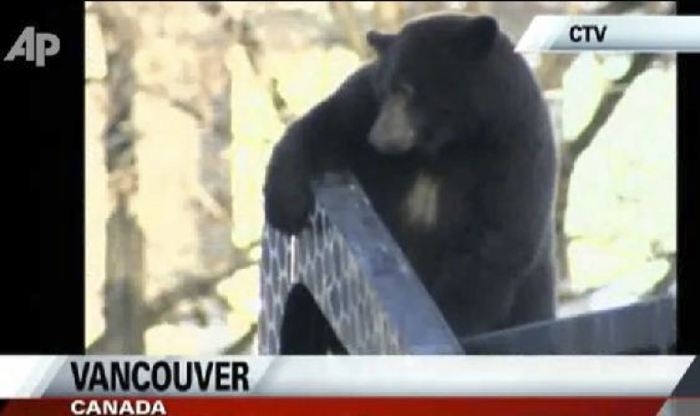 <p>In downtown Vancouver, Canada, a bear takes a ride on a garbage truck. The bear is thought to have been foraging in the dumpster. It was tranquilized and returned to the wild.</p>