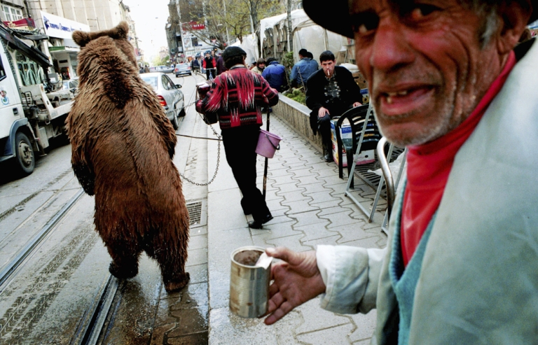 <p>Angel Angelv, center, with his colleague Todor and dancing bear 'Gosho' perform on the streets of Sofia, Bulgaria for small change. The bear is pierced through his nose and led on a metal pole, a tether that keeps him from attacking humans.</p>