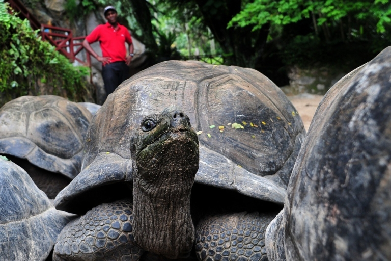 <p>Endangered tortoises in Zimbabwe are being eaten by Chinese expatriate workers. The tortoise shown here is in the Seychelles.</p>