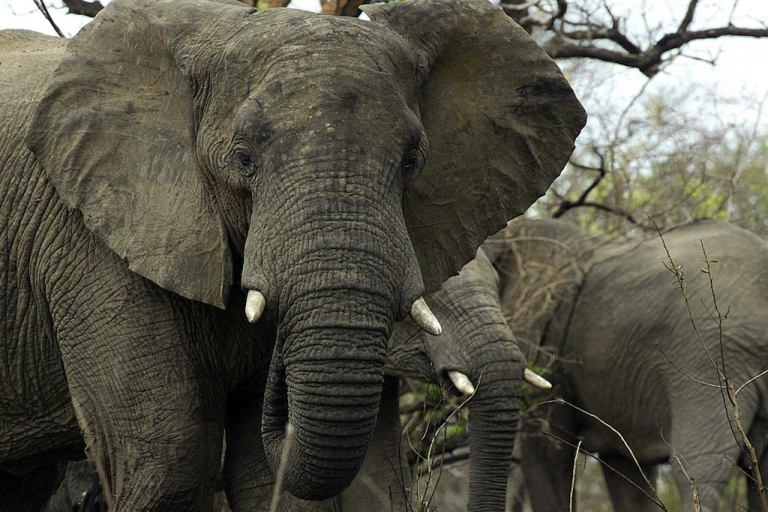 <p>Nine elephants died and had their tusks removed by poachers after watering holes were poisoned in five game reserves in Zimbabwe, officials say.</p>