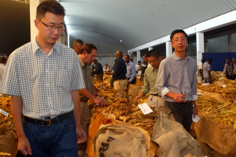 <p>International tobacco buyers look at bales for sale at the official opening of the tobacco selling season at the Boka Auction Floors in Harare on February 15, 2012.</p>
