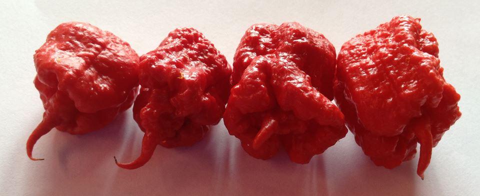 Carolina Reapers peppers
